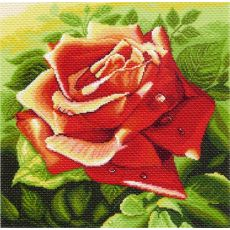 Красная роза (41х41)